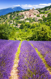 Lavender field and village, France.の写真素材 [FYI00657110]