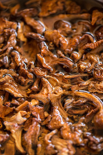 Dried mushroomsの写真素材 [FYI00657381]