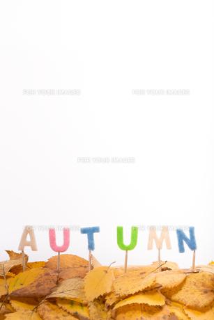 autumn lettersの素材 [FYI00657902]