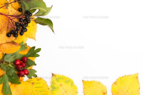 autumn frameの素材 [FYI00657903]