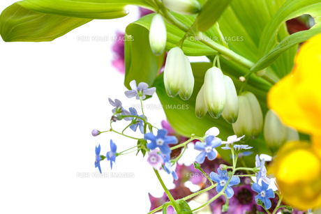 bunch of wild flowers with white copyspaceの写真素材 [FYI00658162]