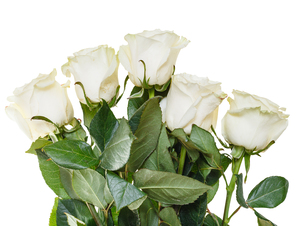 side view of bouquet of white roses isolatedの写真素材 [FYI00658187]
