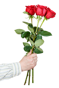 hand giving bouquet of three red roses isolatedの写真素材 [FYI00658212]