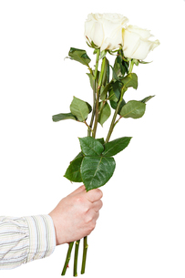 hand giving three white roses isolatedの写真素材 [FYI00658217]