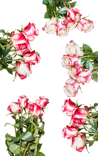 set of pink rose bouquets isolated on whiteの写真素材 [FYI00658250]