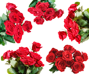 set of red rose bouquets isolated on whiteの写真素材 [FYI00658252]