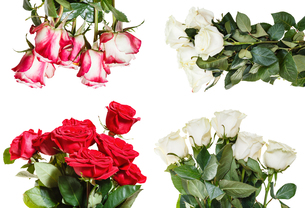 set of various rose bouquets isolated on whiteの写真素材 [FYI00658255]
