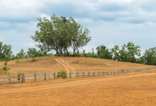 Grass Hill (Phukhao Ya) or Bald Hill (Khao Hua Lan) in Ranong province, Southern Thailandの写真素材 [FYI00658525]