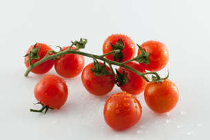 Tomatoes on white backgroundの写真素材 [FYI00658664]
