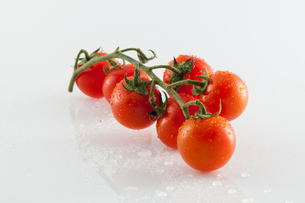 Tomatoes on white backgroundの写真素材 [FYI00658667]