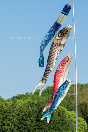 Koi Fish Flags for Boy's Dayの写真素材 [FYI00659358]