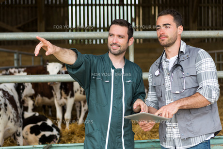 Farmer and veterinary working together in a barnの素材 [FYI00659568]