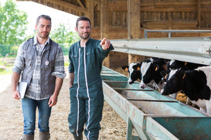 Farmer and veterinary working together in a barnの素材 [FYI00659587]