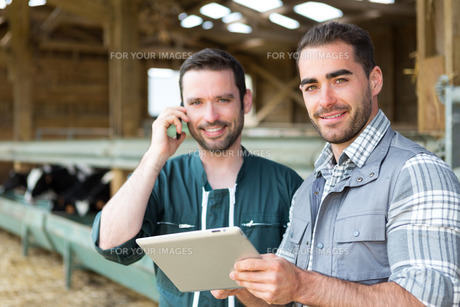Farmer and veterinary working together in a barnの素材 [FYI00659594]