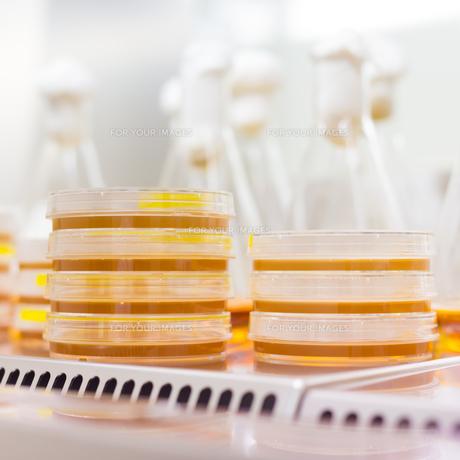 Petri dish in laminar flowの写真素材 [FYI00659808]