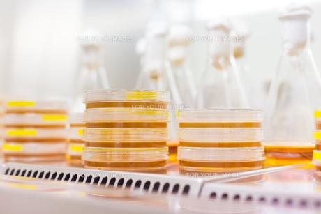 Petri dish in laminar flowの写真素材 [FYI00659812]