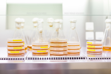 Petri dish and Erlenmeyer flask.の写真素材 [FYI00659828]