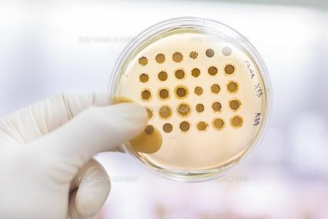 Fungi grown on agar plate.の写真素材 [FYI00659833]