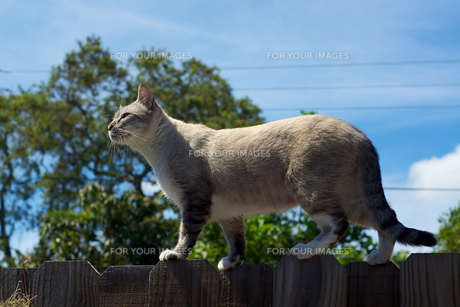 cat on fence in profileの写真素材 [FYI00659997]