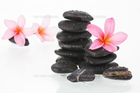 Plumeria flowers and black stones over white backgroundの素材 [FYI00660161]