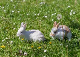 home_animalsの写真素材 [FYI00660523]
