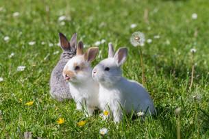 hareの写真素材 [FYI00660524]