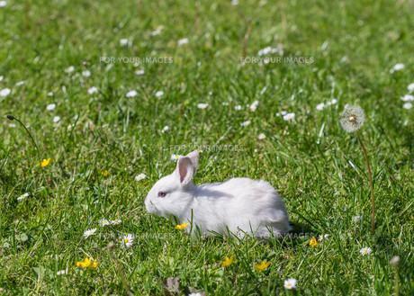 home_animalsの写真素材 [FYI00660525]