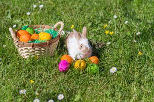 easter bunnyの写真素材 [FYI00660528]