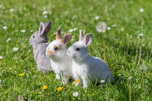 home_animalsの写真素材 [FYI00660529]
