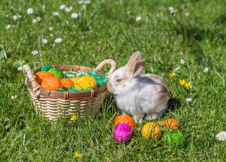 easter bunnyの写真素材 [FYI00660530]