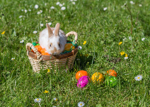 easter bunnyの写真素材 [FYI00660532]
