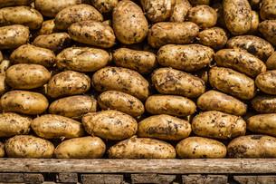 Organic Raw Potatoesの写真素材 [FYI00660663]