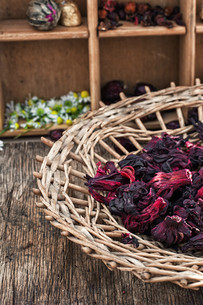 Hibiscus teaの写真素材 [FYI00660737]