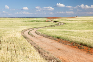Country road through the fields. Aragon, Spainの写真素材 [FYI00660937]