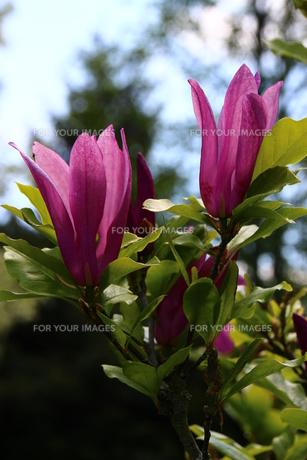 plants_flowersの素材 [FYI00661461]