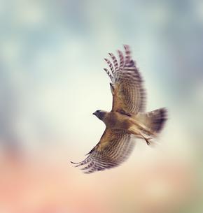 birdsの写真素材 [FYI00661716]