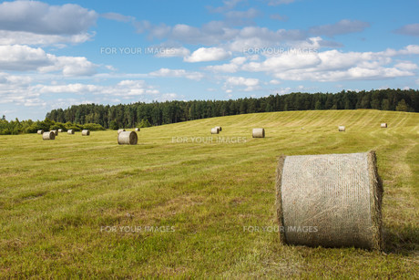 meadow with rolled up wheatの写真素材 [FYI00661788]