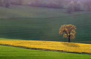 grass_fieldsの素材 [FYI00661913]