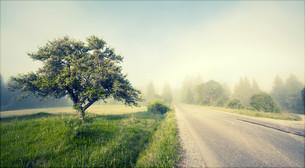 Rural road in morning fogの写真素材 [FYI00662060]