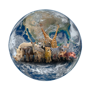 group of africa animal with planet earthの写真素材 [FYI00662170]