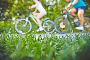 Green lawnの写真素材 [FYI00662325]