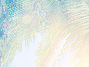 Beautiful tropical backgroundの写真素材 [FYI00662345]