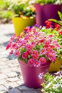 Flower potsの写真素材 [FYI00662591]