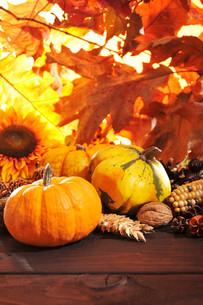 pumpkinsの写真素材 [FYI00662610]