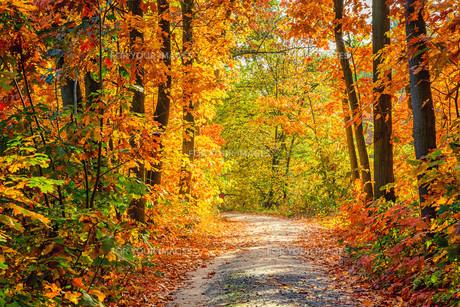 Autumn forestの素材 [FYI00662640]