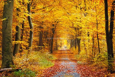Autumn forestの素材 [FYI00662642]