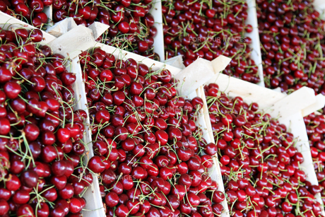 cherries in boxes at a farmers marketの写真素材 [FYI00663002]