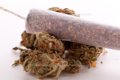 dried cannabis flowers grass with joint smoking kiffenの写真素材 [FYI00663013]