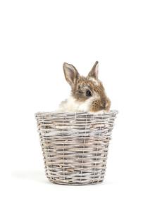 easter bunnyの写真素材 [FYI00663345]