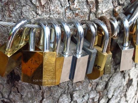 love treeの素材 [FYI00663439]